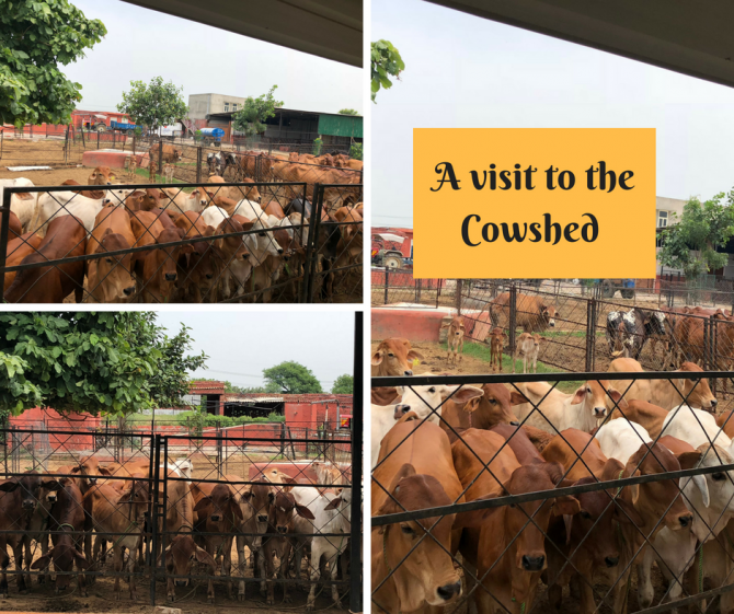Learnings from my recent visit to a cowshed cum research centre